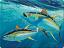 Guy Harvey Tuna Cutting Board