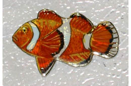 Clown Fish Magnet