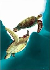 Sea Turtle Flight Pin