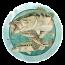 Largemouth Bass Coasters