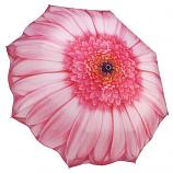Pink Daisy Umbrella