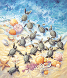 Green Turtle Hatching Puzzle